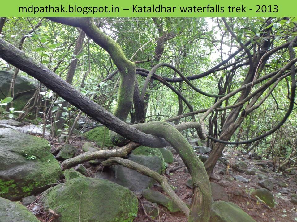 jungle at ullas valley lonavla