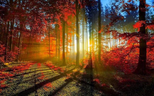 lijepa šuma
