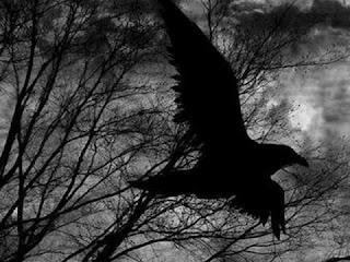 Ворон в ночи