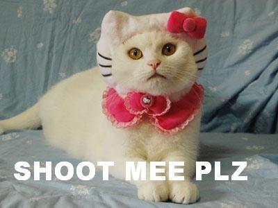 Shoot Me Please, funny cat meme