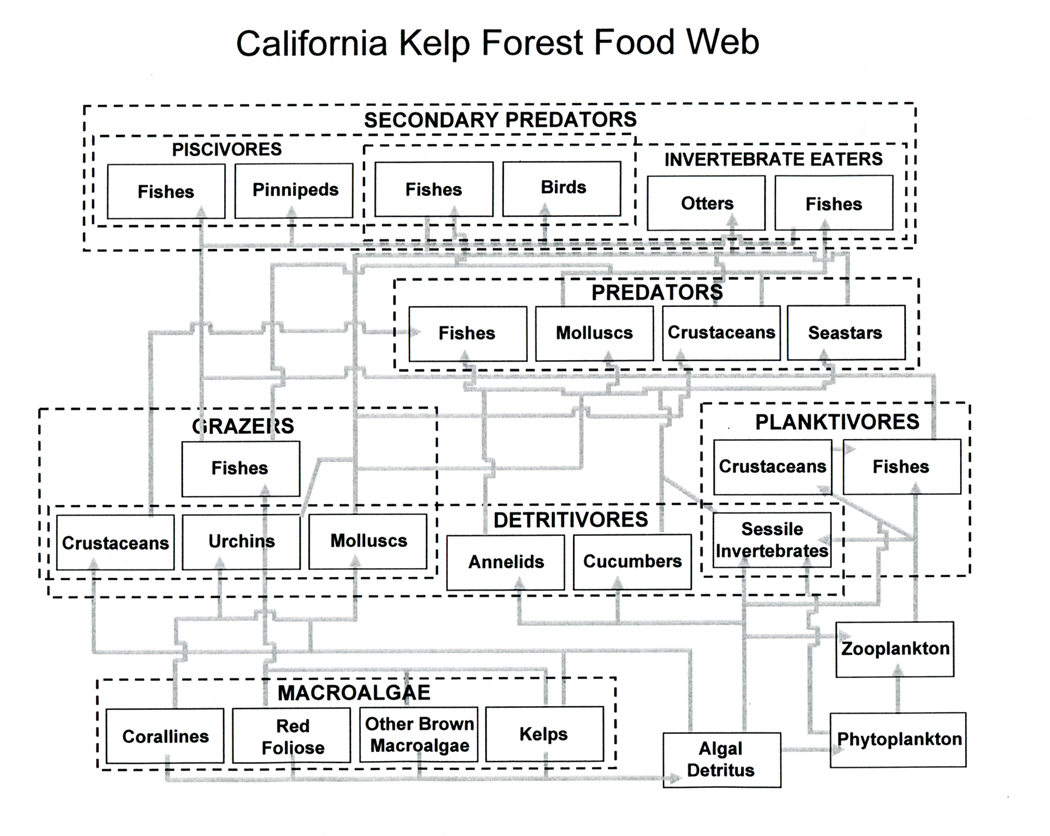 kelp forest diagram home stereo system wiring ecosystem food chain
