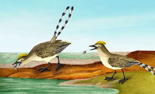 Fish-eating Mesozoic bird provides evidence of modern avian digestive features
