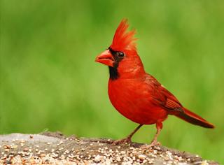 Sekilas Info Tentang Burung (Berita Burung) - Burung Tercantik di Dunia Warna Bulu Mereka Seperti Lukisan yang Indah
