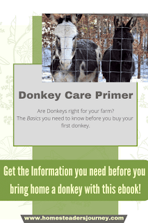 Donkey Care Primer! The ebook you should read before you bring home a donkey! All the basic care and things you'll need! #donkeycare #donkeys