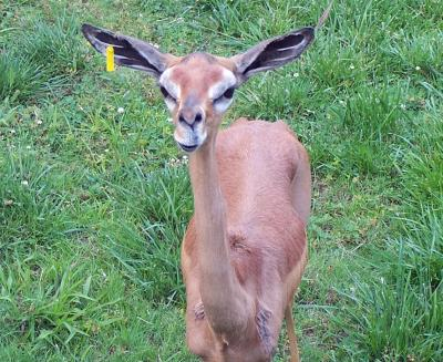 [Image: Funny+deer+face+1.jpg]