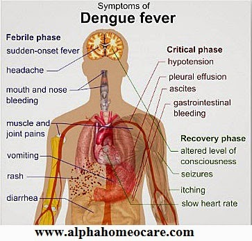 Dengue fever and Homeopathy treatment