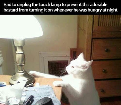 cat with lamp, cat turns on light, funny cat