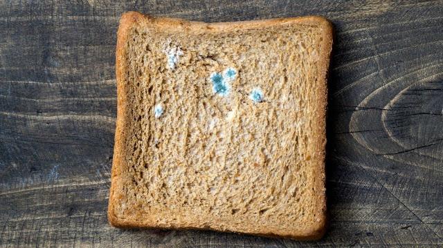 bread-fungai