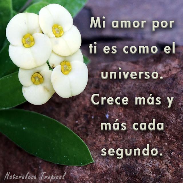 Mi amor por ti es como el universo. Crece más y más cada segundo.