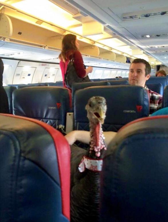 8 Perkara Menyampah Bila Naik Pesawat Tambang Murah