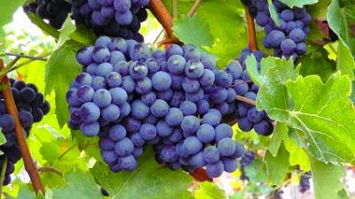 Ή χρήση του κρασιού στην ιατρική παράδοση των Ελλήνων