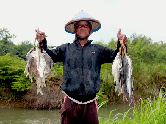 Budidaya Ikan Tawes
