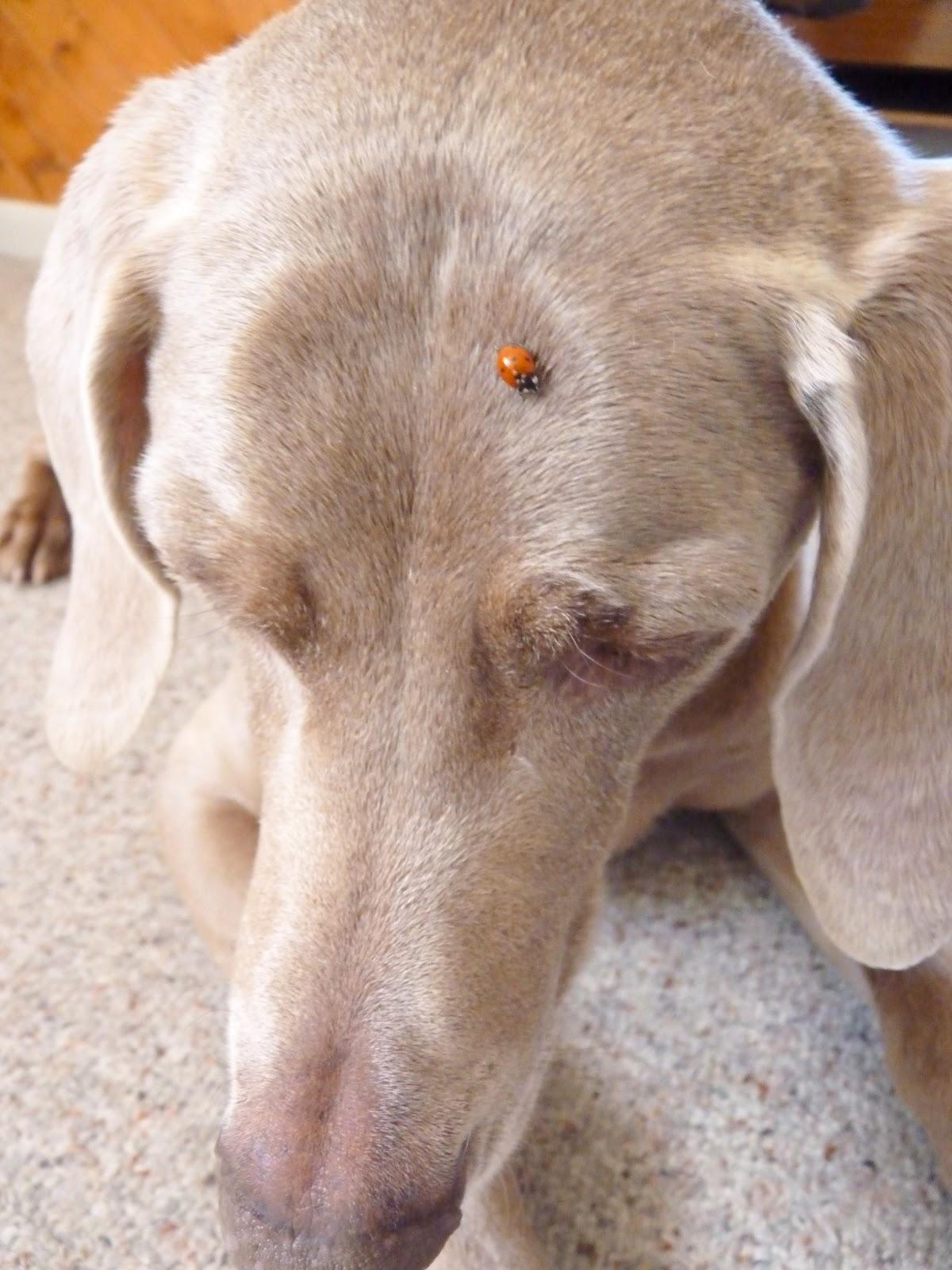 Gospel Of Goose Little Miss Ladybug