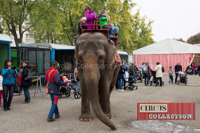 promenade a dos d'éléphant dans le zoo du Cirque Knie