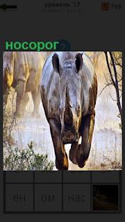 По пыльной дороге бежит носорог, только уши торчком