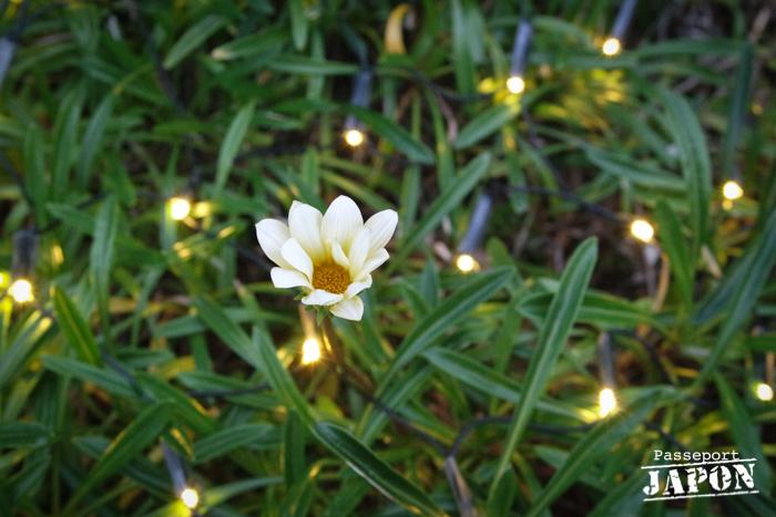 Illumination massifs floraux, Glover Garden, Nagasaki
