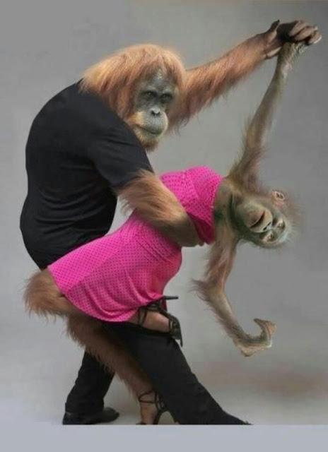 tango, scimmie, coppia, ballo,