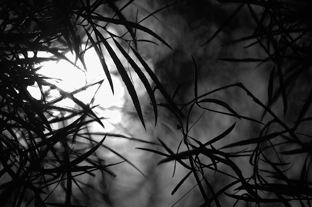 shadowed silhouettes of plant leaves. Dramatic.