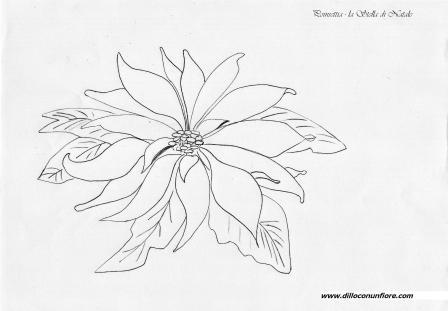 Poinsettia coloring pages | Free Coloring Pages | 311x448