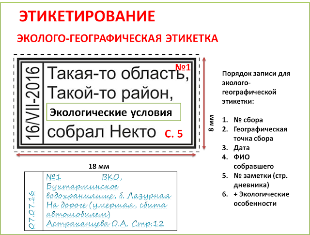 polza-kollekcionirovaniya-magiya-biologii