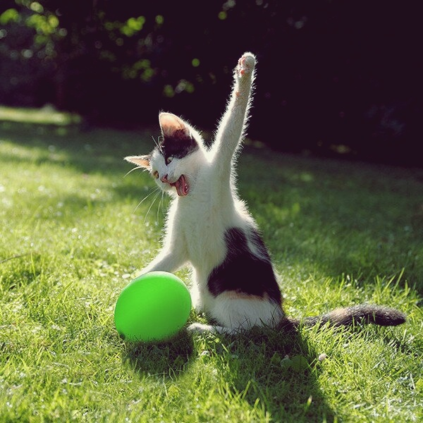 Gambar Kucing Sedang Marah Imgoke