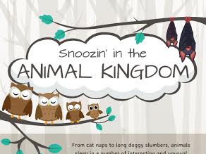 Which animal do you sleep like?