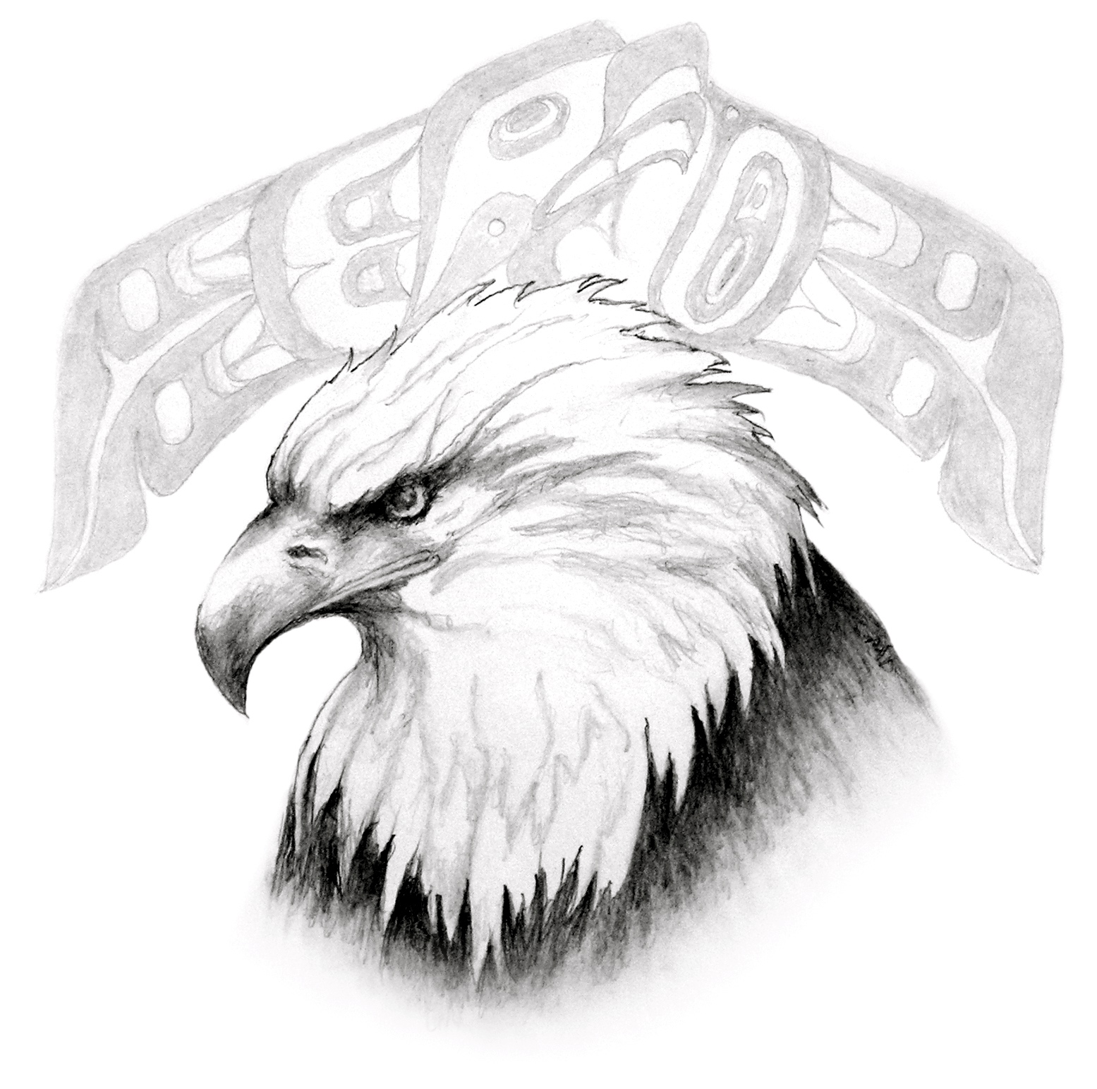 It's just a photo of Wild Drawing Of Eagle