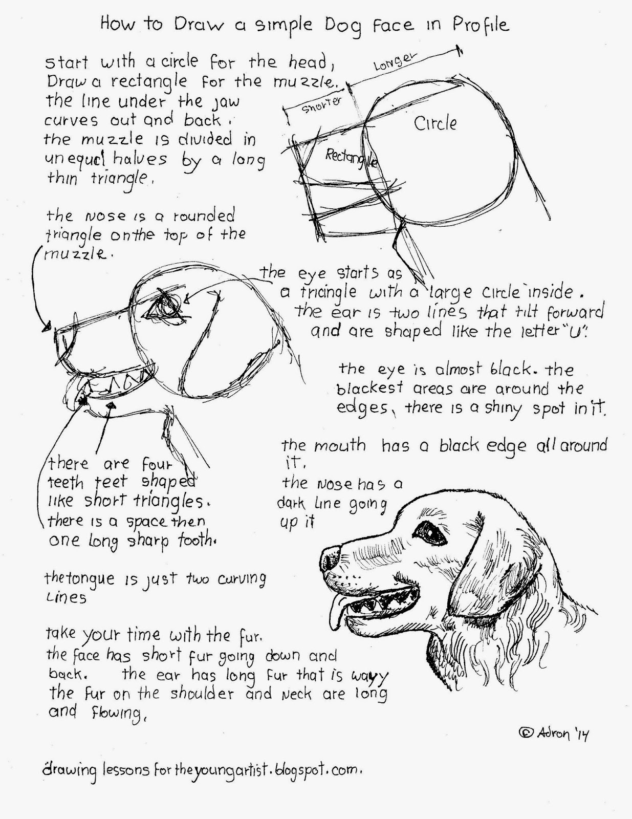 How To Draw A Dog On Youtube Solution For How To For Dummies Youtube How To