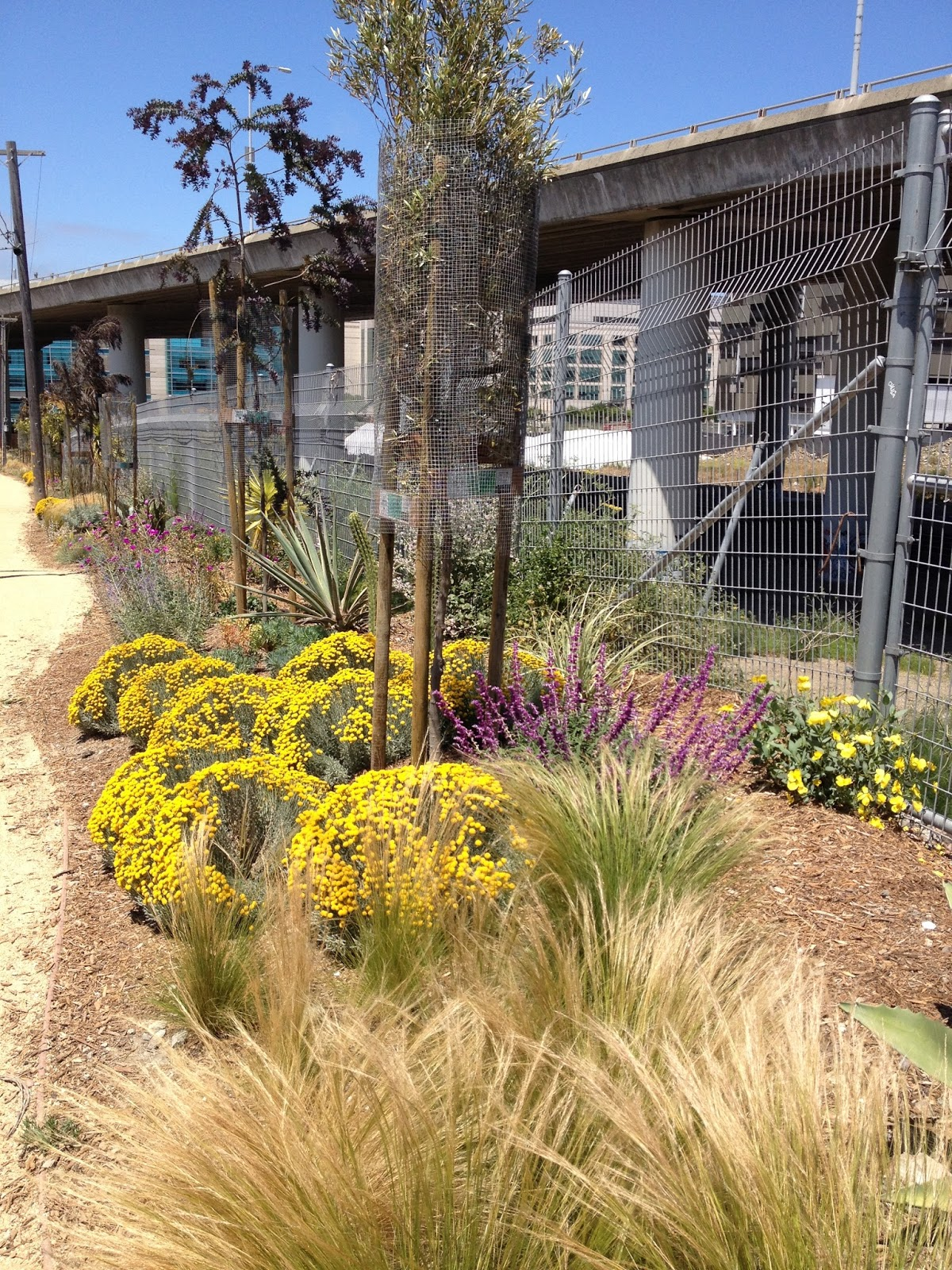 Pennsylvania Gardens San Francisco Parks Alliance