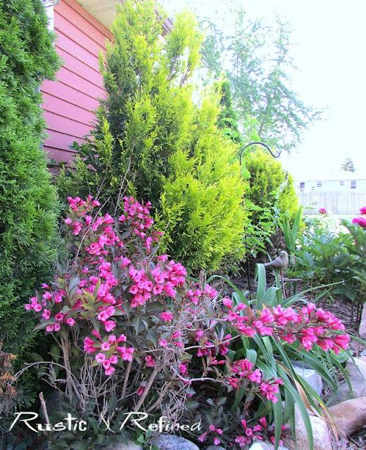 Flowering bushes in the garden