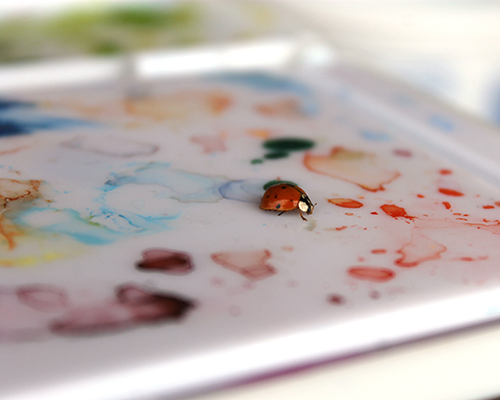 A ladybug on a watercolor paint palette