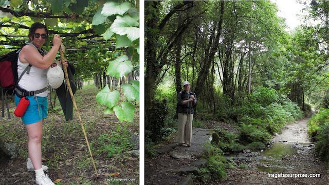 Trecho original do Caminho de Santiago, entre Pontevedra e Caldas de Reis