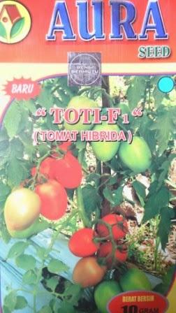 Benih, Toti, Tomat Toti Murah, Aura Seed,tomat, tahan virus,kuning, keriting, unggul, dataran rendah, tinggi, petani