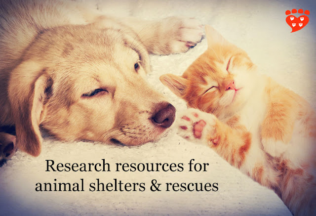 A cat and dog asleep, dreaming of resources for dog and cat owners