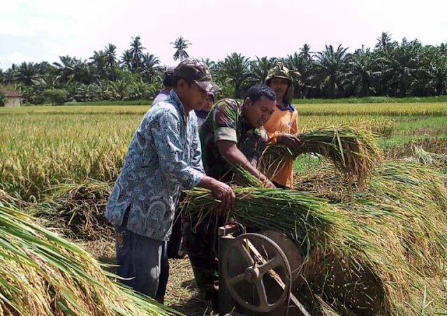 """Panen Padi """"Mikongga"""" di Desa Bekulap, Babinsa Koramil 02/Selesai dan PPL Lakukan Pedampingan"""