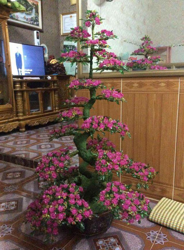 Goc bonsai cay hoa mai