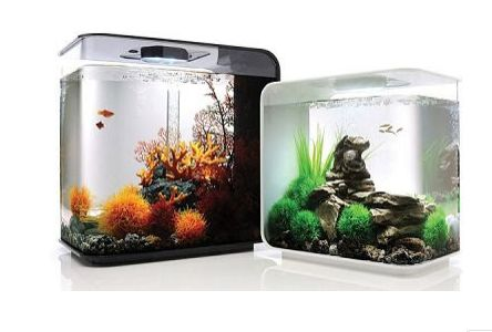 Aquarium Ikan Hias Mini