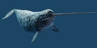 Paus Narwhal