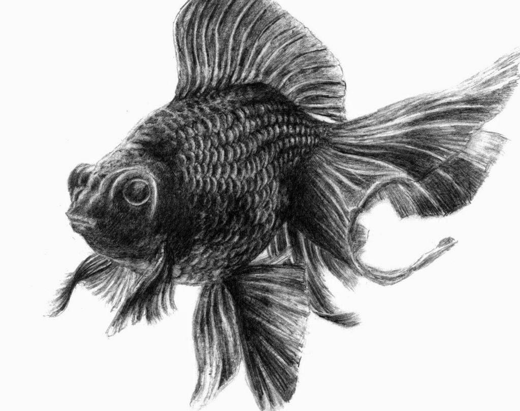 101 Gambar Arsir Ikan Paling Keren Gambar Pixabay