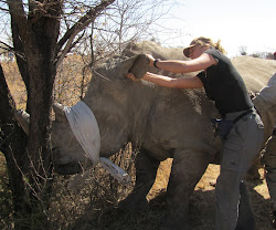 Rhino capture