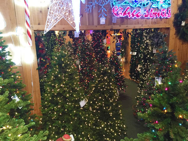 Charitable Discovering A New Way To See A Christmas Tree