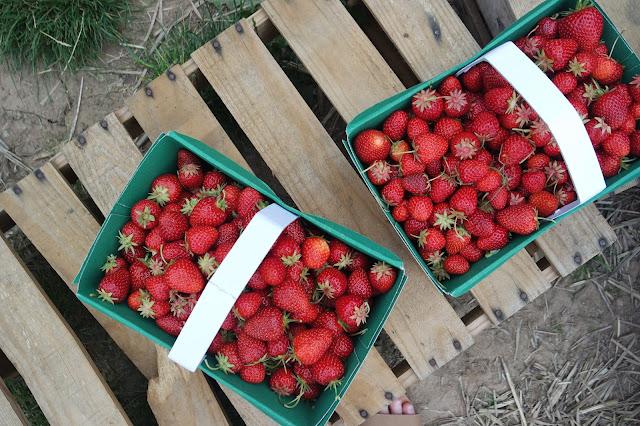 Strawberry Picking - Spilman Farm - York - Summer