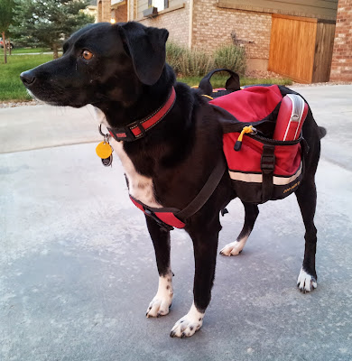 Dog wearing Nintendo 3DS in backpack to earn Play Coins