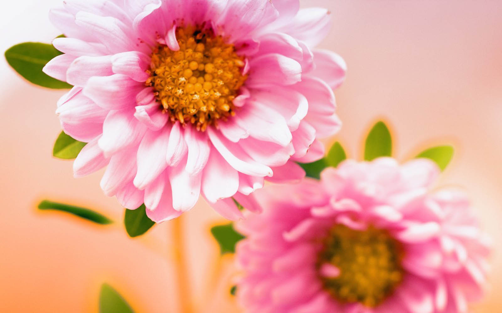 Love Wallpaper Pictures Pictures Of Pink Flowers