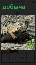 460 слов 4 добычей тигра является дикий кабан, которого он схватил зубами 11 уровень