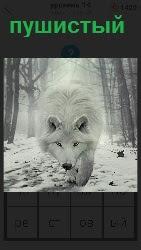 пушистый белый зверь бежит по дороге в зимнее время