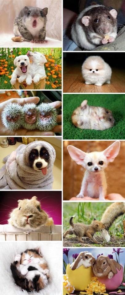 تحميل 200 صورة عالية الجودة لمجموعة من الحيوانات المضحكة