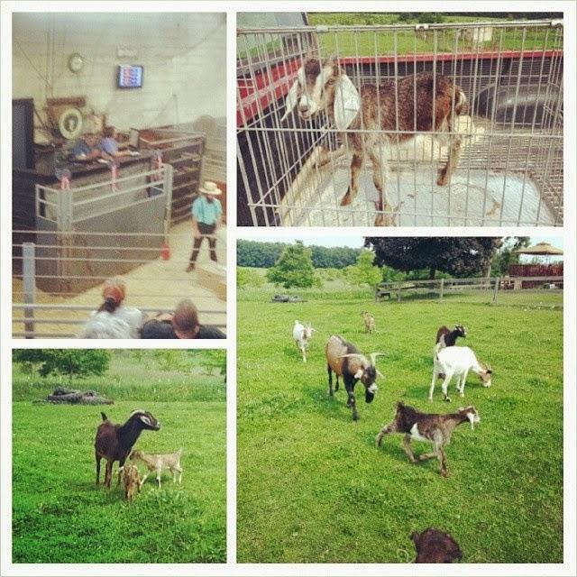 Fields Of Heather: On The Farm 6/20/2014