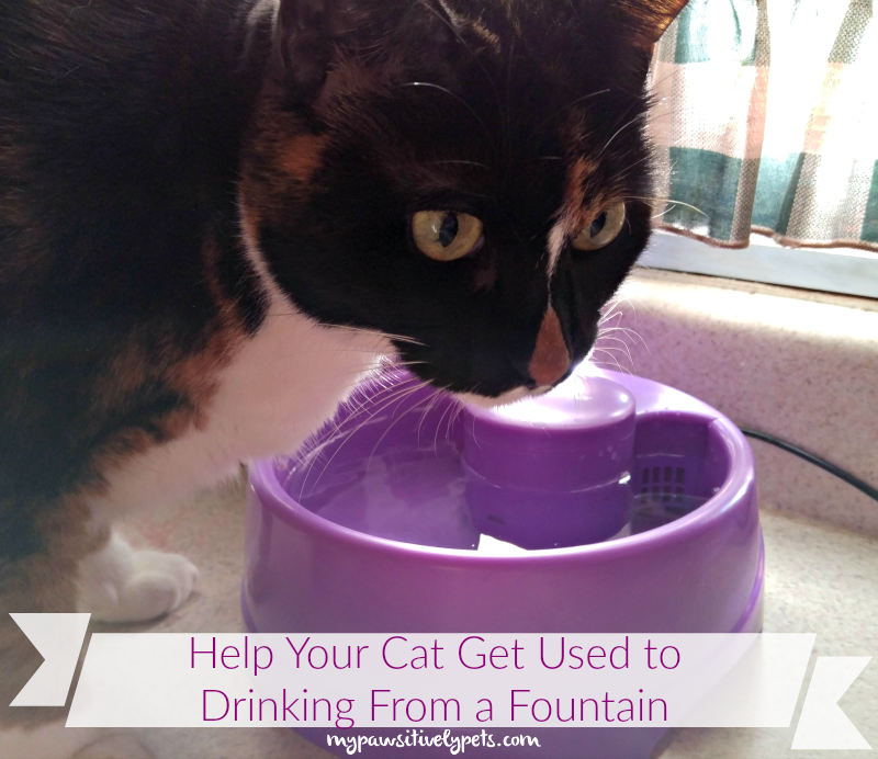 Help Your Cat Get Used to Drinking From a Fountain With PetSafe ...
