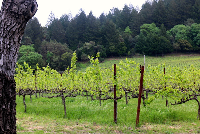 Wein, Kalifornien, Napa
